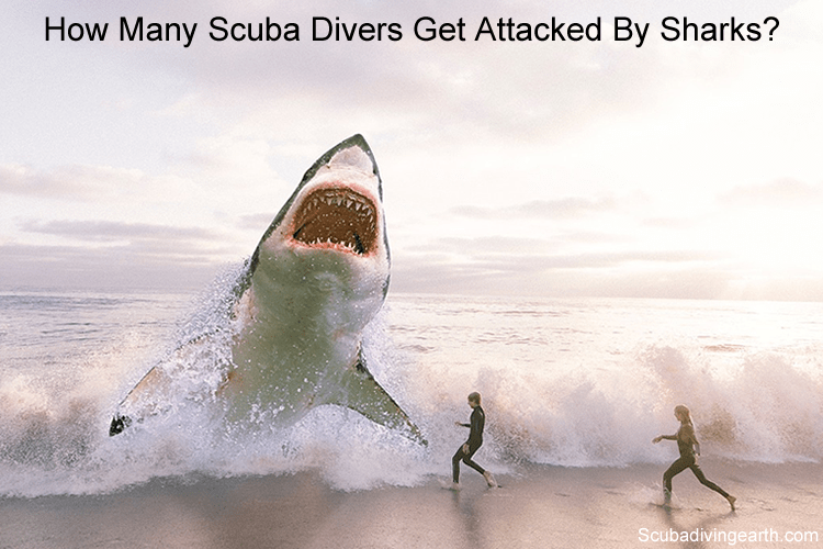 How many scuba divers get attacked by sharks