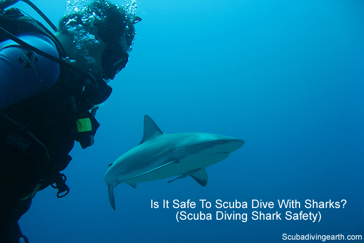Is it safe to scuba dive with sharks - shark scuba diving safety