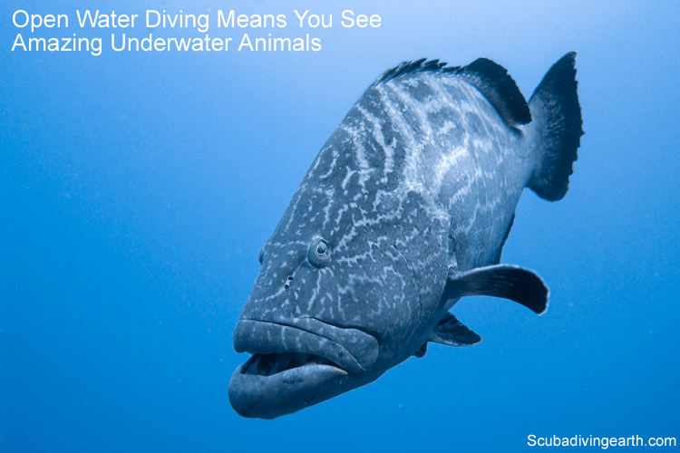 Scuba dive type 1 - Open water diving grouper blue water diving