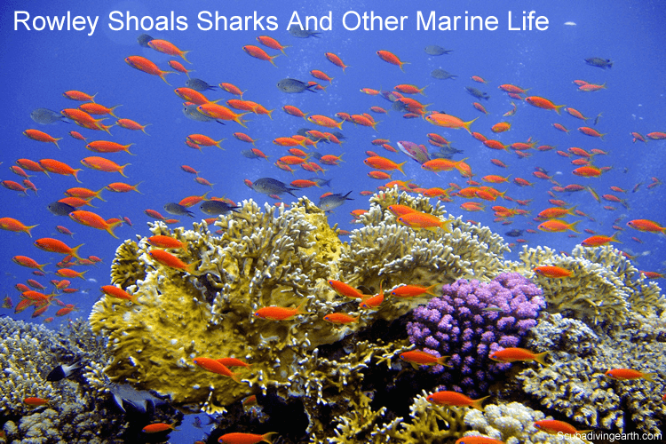 Rowley Shoals sharks and other marine life