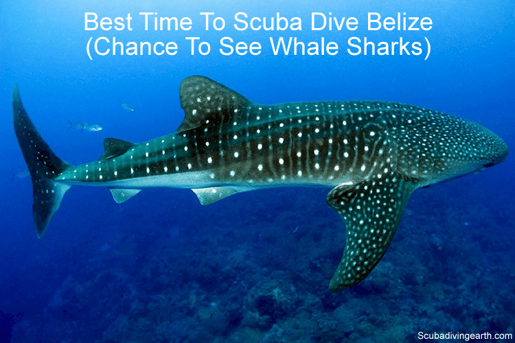 Best time to scuba dive in Belize - chance to see whale sharks