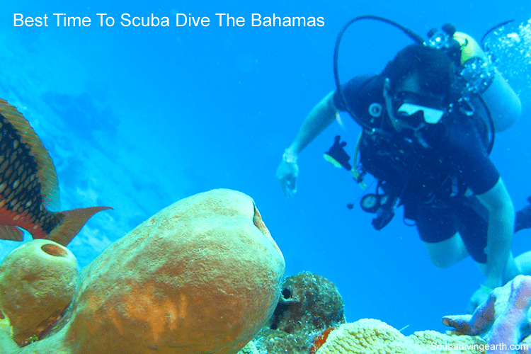 Best time to scuba dive the Bahamas