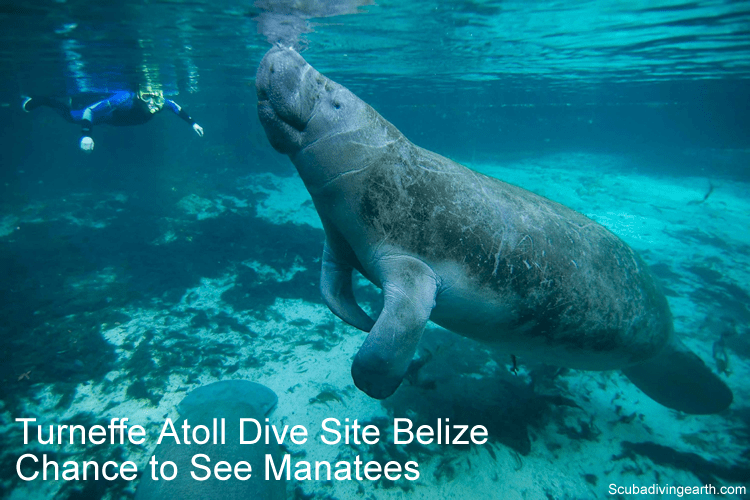 Turneffe Atoll dive site - chance to see manatees and dolphins