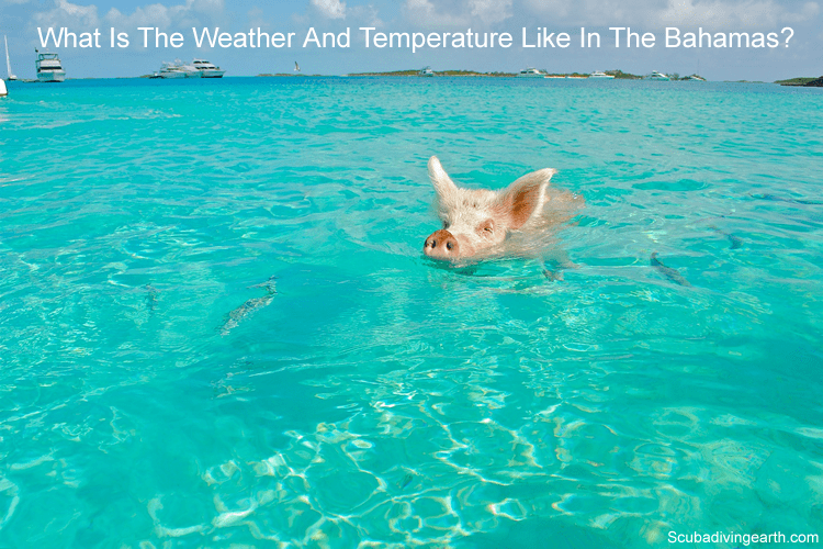 What is the weather and temperature like in the Bahamas