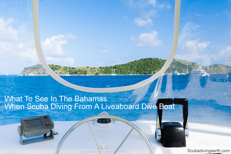 What to see in the Bahamas when scuba diving from a liveaboard dive boat