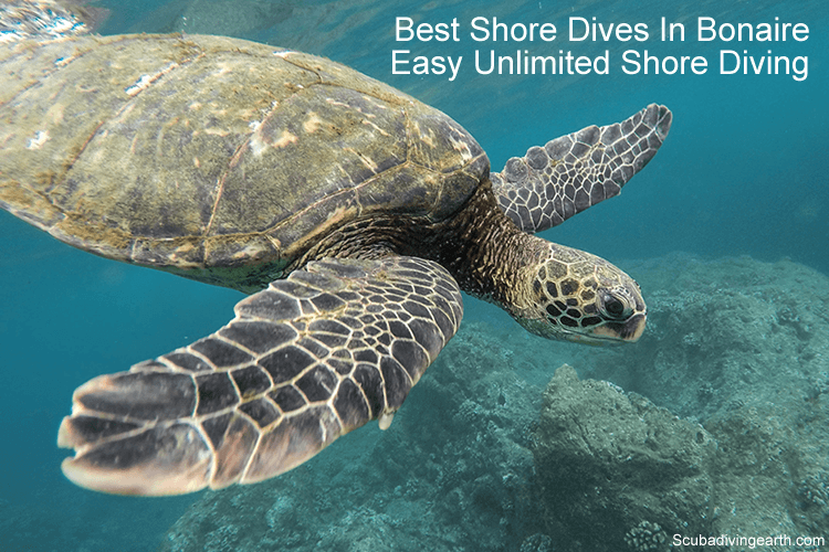Best Shore Dives In Bonaire - Easy unlimited shore diving Bonaire