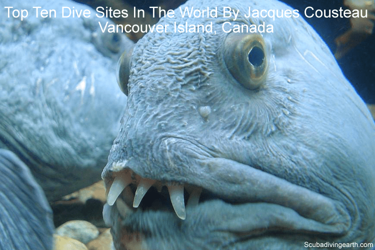Top Ten Dive Sites In The World By Jacques Cousteau - Vancouver Island Canada