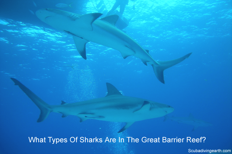 What types of sharks are in the Great Barrier Reef?