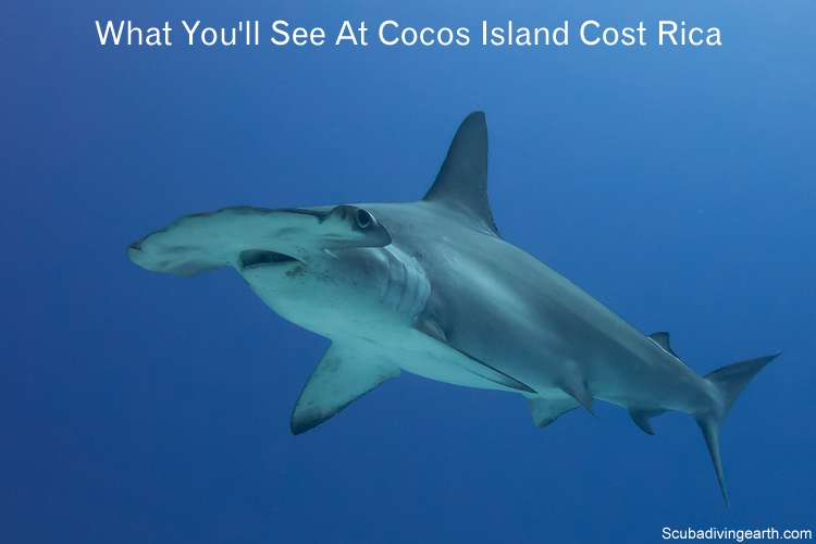What you will see at Cocos Island Cost Rica scuba diving from a liveaboard