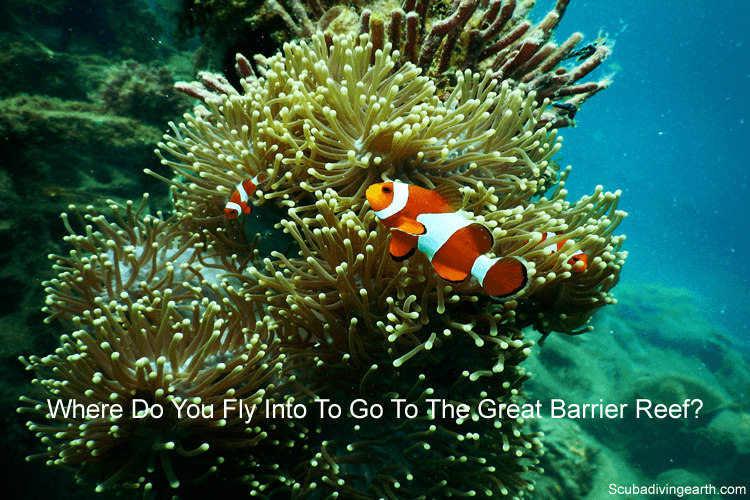 Where do you fly into to go to the Great Barrier Reef