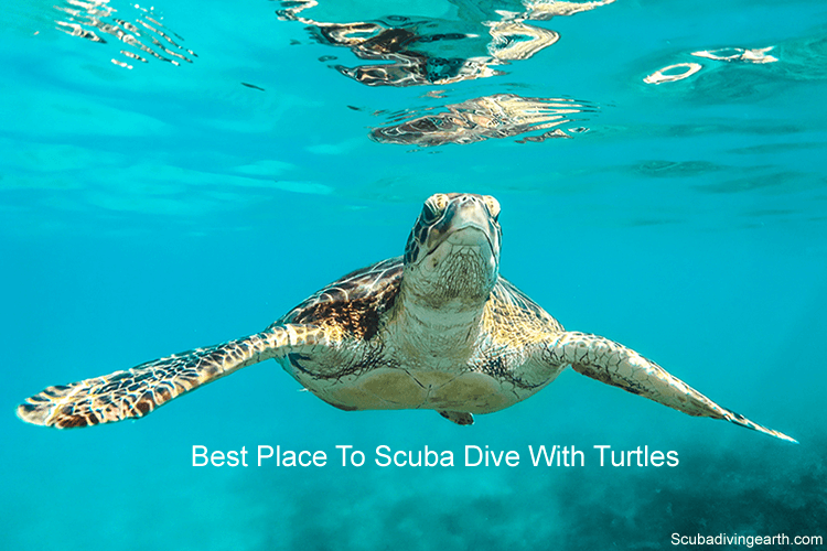 Best place to scuba dive with turtles - Hawksbill Sea Turtle
