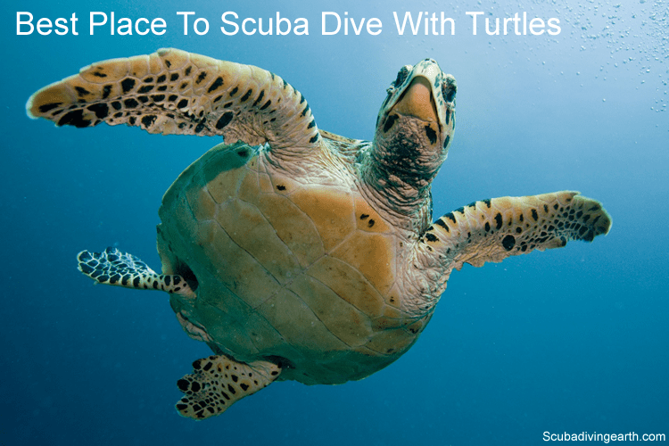 Best place to scuba dive with turtles