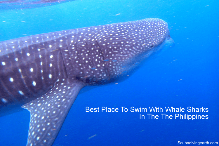 Best place to swim with whale sharks in Philippines