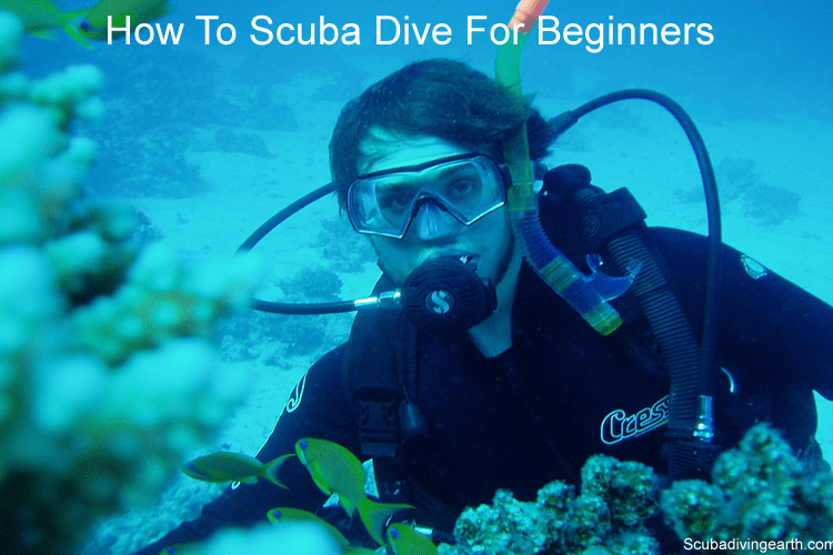 How to scuba dive for beginners