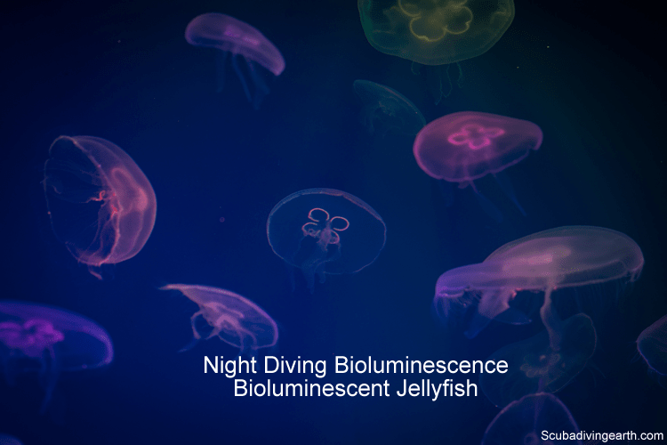 Night Diving Bioluminescence and bioluminescent jellyfish