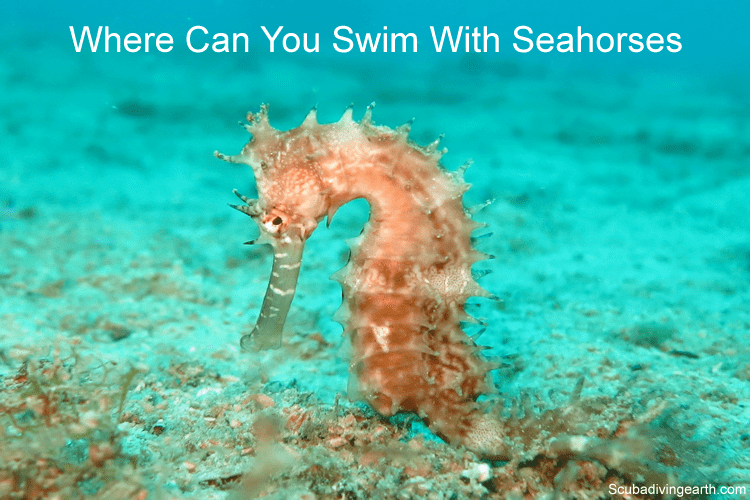 Where can you swim with seahorses