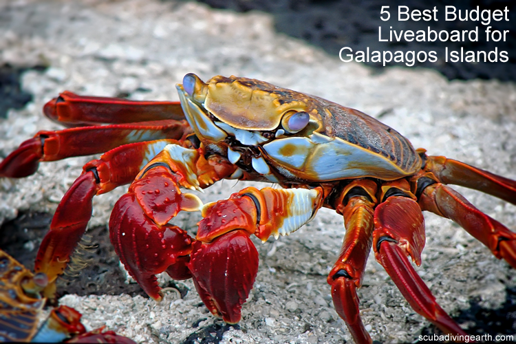 5 Best Budget Liveaboard for Galapagos Islands large