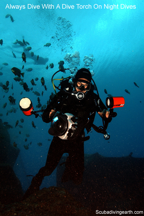 Always dive with a dive torch on a night dive