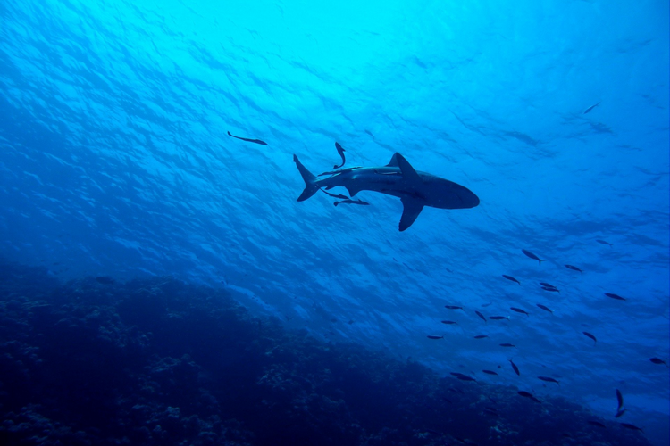 Antigua offers the best scuba diving in the Caribbean for beginners