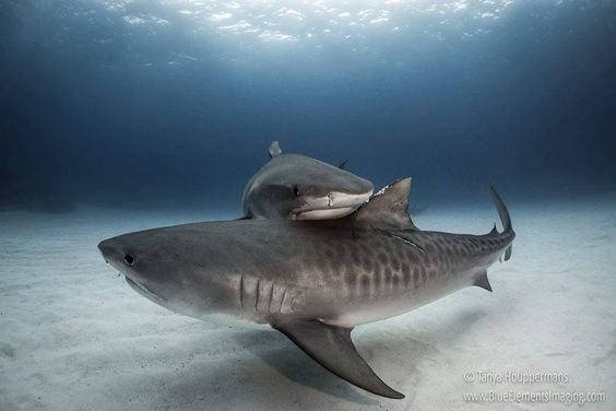 Are cuddling sharks cute animals of the oceans