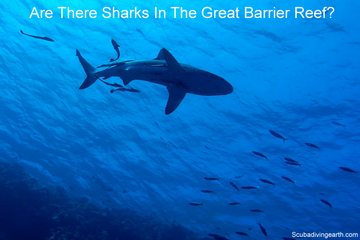 Are There Sharks In The Great Barrier Reef? (What Sharks Do You See?)