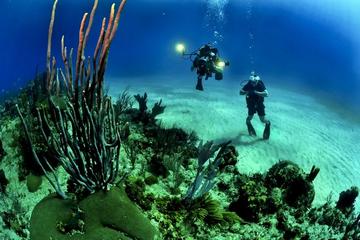BSAC vs NAUI (Which diving certification is better BSAC or NAUI?)