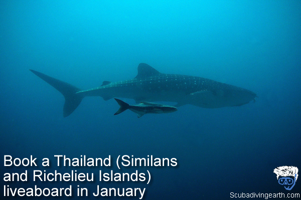 Book a Thailand - Similans and Richelieu Islands -  liveaboard in January large