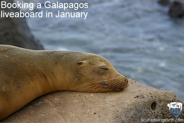 Booking a Galapagos liveaboard in January