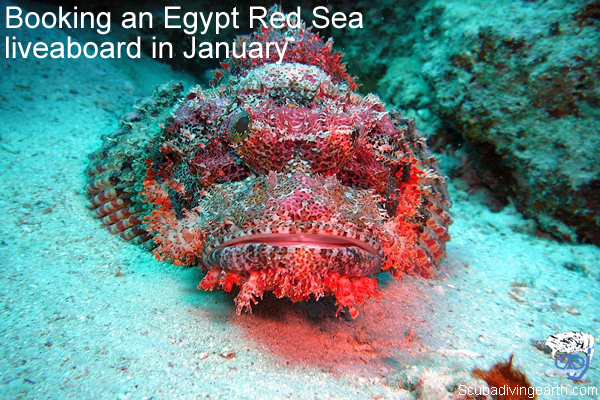 Booking an Egypt Red Sea liveaboard in January