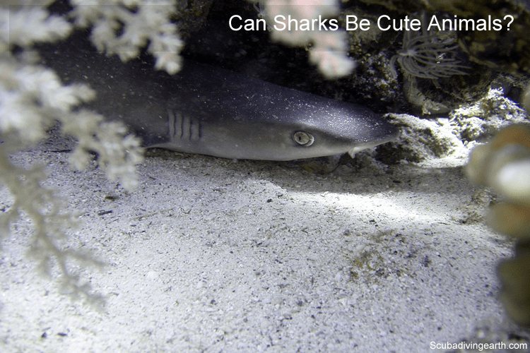 Can sharks be cute animals