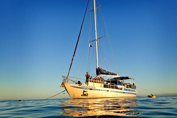 Coral Sea Dreaming - Cheap liveaboard Great Barrier Reef