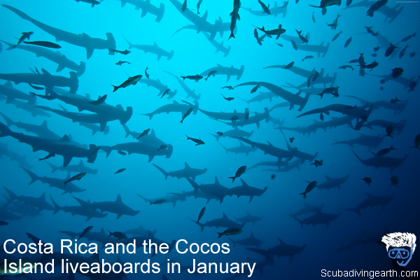 Costa Rica and the Cocos Island liveaboards in January