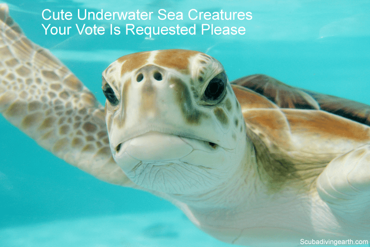 Cute Underwater Sea Creatures - Your Vote Is Requested Please