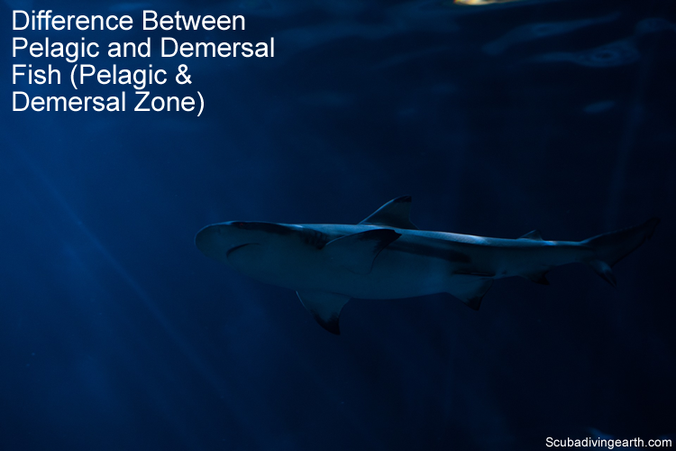 Difference Between Pelagic and Demersal Fish - Pelagic and Demersal Zone
