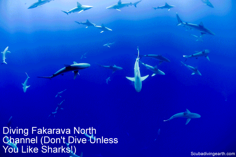 Diving Fakarava North Pass - Don't Dive Unless You Like Sharks small