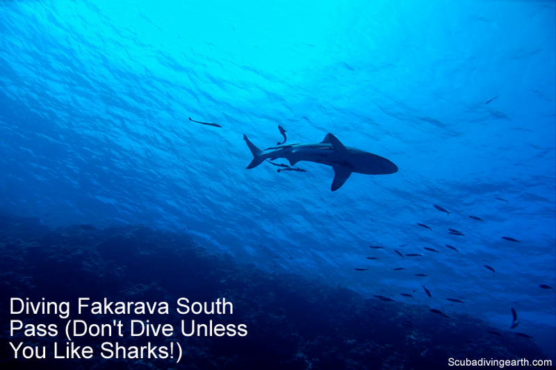 Diving Fakarava South Pass - Don't Dive Unless You Like Sharks large