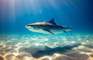 Do Tiger Sharks Attack Humans: Are They Aggressive?
