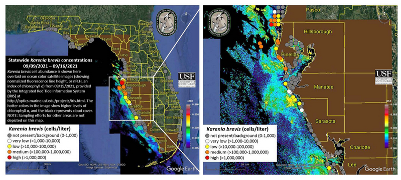 Florida red tide map