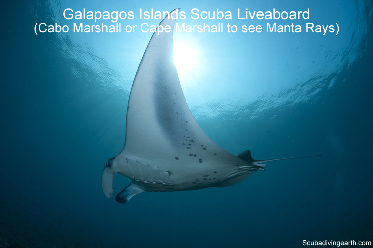 Galapagos Islands Scuba Liveaboard - Cabo Marshall or Cape Marshall to see Manta Rays