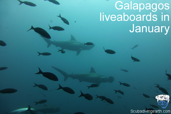 Galapagos liveaboards in January