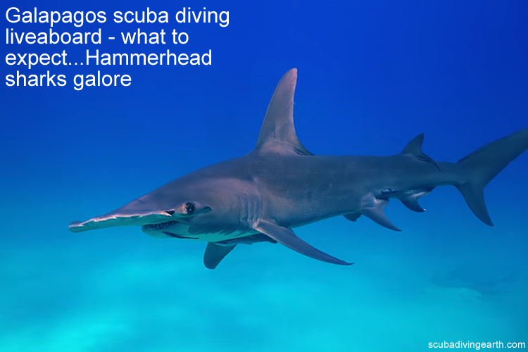 Galapagos scuba diving liveaboard - what to expect...Hammerhead sharks galore