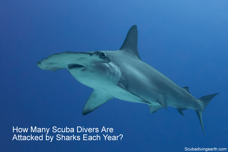 How many scuba divers get attacked by sharks each year