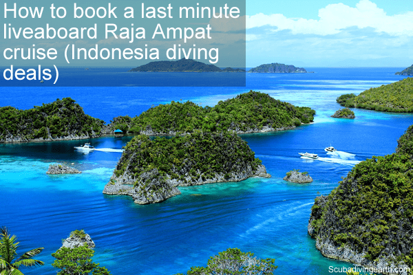 How to book a last minute liveaboard Raja Ampat cruise - Indonesia diving deals