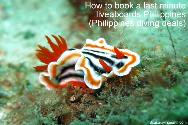 How to book a last minute liveaboards Philippines - Philippines diving deals