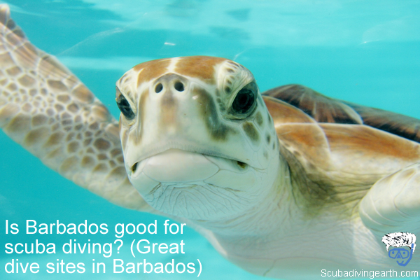Is Barbados good for scuba diving - Great dive sites in Barbados