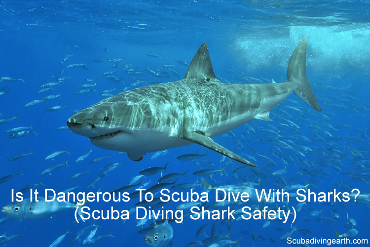Is it dangerous to scuba dive with sharks - scuba diving shark safety