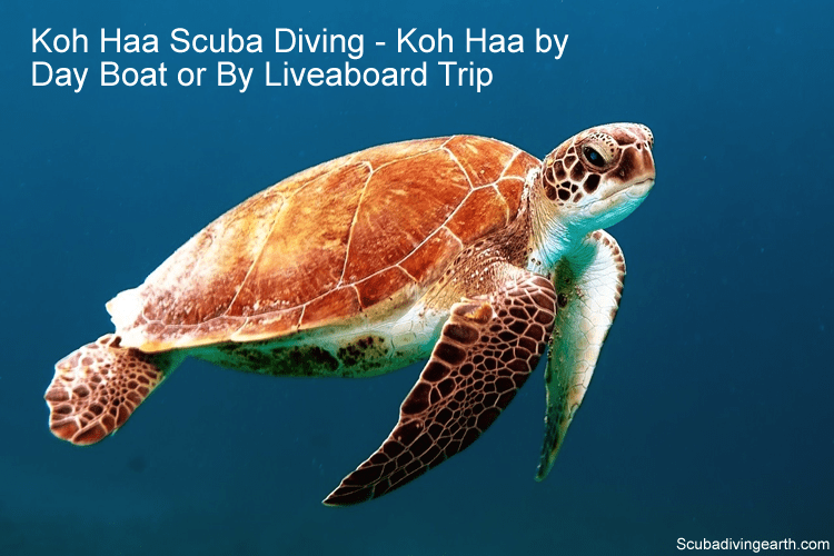Koh Haa Scuba Diving - Koh Haa by Day Boat or By Liveaboard Trip