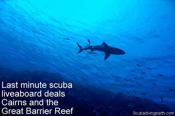 Last minute scuba liveaboard deals Cairns and the Great Barrier Reef