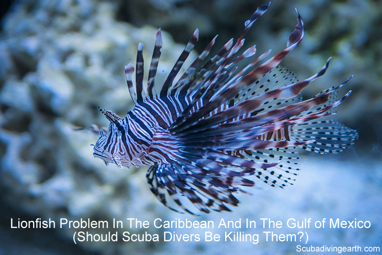 Lionfish problem in the Caribbean and in the Gulf of Mexico - Should scuba divers be killing them large