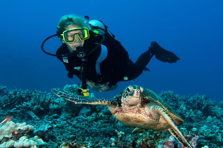 Diver with sea turtle - Liveaboard Diving in Hawaii